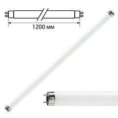 Лампа люминесцентная PHILIPS TL-D 36W/33-640, 36 Вт, цоколь G13, в виде трубки 120 см